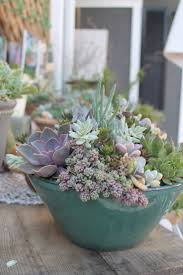 plant wonderful outdoor cactus plants 26 best succulent garden