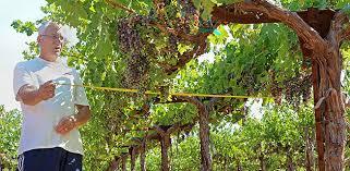 Water Challenge Vine Bringing Space Technology To Water Needs In California Vineyards