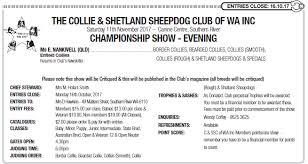 belgian shepherd kempsey canine event diary at dogz online