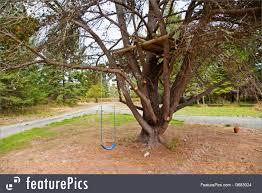 tree platform and swing image