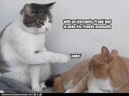 Lol Cat Meme - lolcats classics lol at funny cat memes funny cat pictures