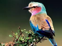 images of beautiful birds beautiful birds of the world