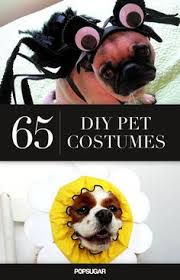 Funny Halloween Costumes Cats Woof Announcing Winners Dog Costume Contest Costume