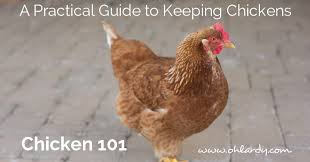 How To Raise Backyard Chickens For Eggs A Practical Guide To Keeping Chickens Chicken Basics