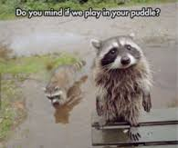 Funny Animal Memes Tumblr - funny animal memes pictures photos images and pics for facebook