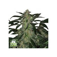 13 cosas que nunca esperas en casas americanas deimos semillas de marihuana jpg