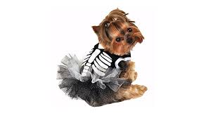 best pet halloween costumes and ideas for dogs and cats