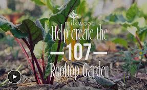 Permaculture Urban Garden Help Us Build The Best Rooftop Garden Ever Milkwood