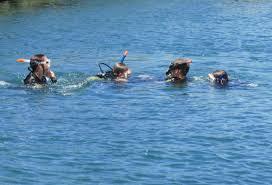 diving tenerife scuba diving tenerife dive and sea tenerife