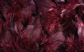 feather desktop wallpaper 12722 1920x1200 umad com