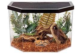 Vivarium Wood Decor Ball Python Vivarium How To Create A Ball Python Home