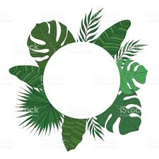 round frame of palm tree leaves tropical card or banner stock
