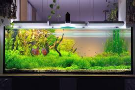 Takashi Amano Aquascaping Techniques 90x45x45 By Perpegg Aquascaping Aquarium Aquascaping French