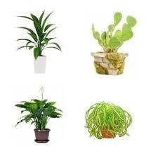 Indoor House Plants Low Light 25 Best Houseplants Images On Pinterest Plants Indoor Gardening