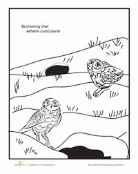 desert owl coloring page burrowing owl owl worksheets and coloring worksheets