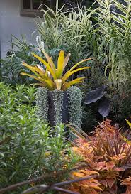 Tropical Potted Plants Outdoor - 65 best outdoor potted arrangements images on pinterest tropical