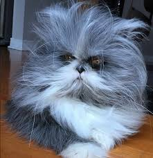 Cat Instagram People Can U0027t Decide Whether This Is A Dog Or A Cat And It U0027ll