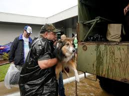 Family Pet And Garden Center - stranded pets rescued amid hurricane harvey flooding in