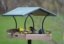 chilton wi wild bird feeders seed birds choice
