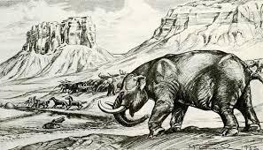 stegomastodon mirificus nmnh 10707 approximately