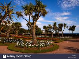 palm trees in the beautiful gardens on the seafront on torquay