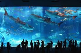 japan u0027s top 10 aquariums all about japan