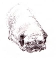 pug see draw share