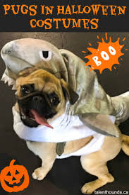 photos from the best halloween party just for pugs talent hounds