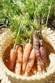 Urban Garden Phoenix - fresh garden eats diana elizabeth