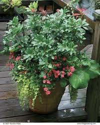 10 plants for year round containers fine gardening