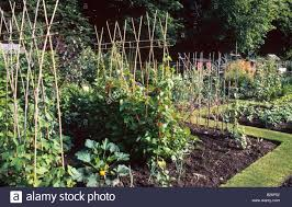 liphook allotments hampshire vegetable garden allotments with