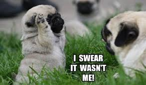 Funny Pug Memes - 12 funniest pug memes and comics