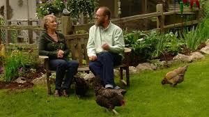 backyard chicken tips youtube