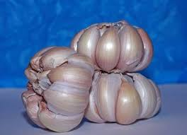 Garlic Health Benefits and Guide Use