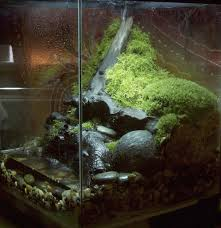 Pacific Aquascape Pics Latest Pacific Rainforest Vivarium Caudata Org