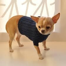 blue sweater chihuahua sweater clothing chihuahua coat