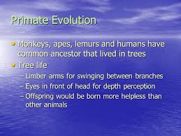 the origin and evolution of life on earth when did life begin