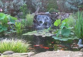 5 benefits of a backyard pond premier ponds