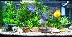 aquarium fishes and fish aquariums manufacturer classical