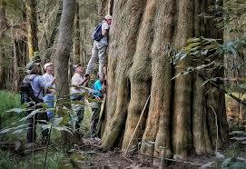 South Carolina national parks images Congaree national park jpg