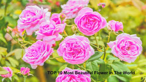 top 10 most beautiful flowers in the world rating youtube