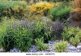 rhs wisley surrey ornamental grasses in winter calamagrostis stock