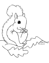 preschool squirrel coloring page coloring home