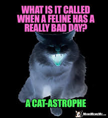 Meme What Is It - funny animal riddles hilarious pet faqs cheep laughs dog cat bird
