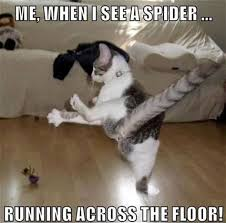 I Saw A Spider Meme - th id oip msexhvigyveucbsdnzc3bwhahv