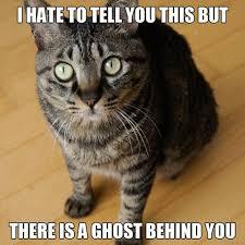 Cat Meme Pictures - cat memes purrfect love