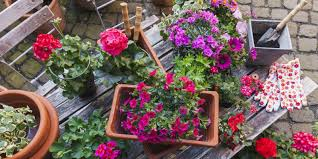 the one pitfall to avoid when planting summer bedding in may