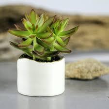 planters cactus garden ideas succulents container pot plant