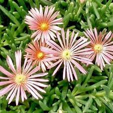 63 best plants images on pinterest gardening plants and flower