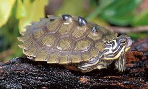 map turtle map turtles